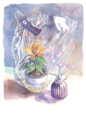 Gift_of_the_sunflower_3
